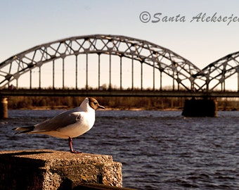 Seagull - Fine Art Photography - Digital photography download, instant download, bird photography, seagull photo, bridge photo, river photo