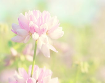 Crown Vetch Color Photo Print { pink, green, blue, sky, wild, flower, sunshine, sunlight, wall art, macro, nature & fine art photography }