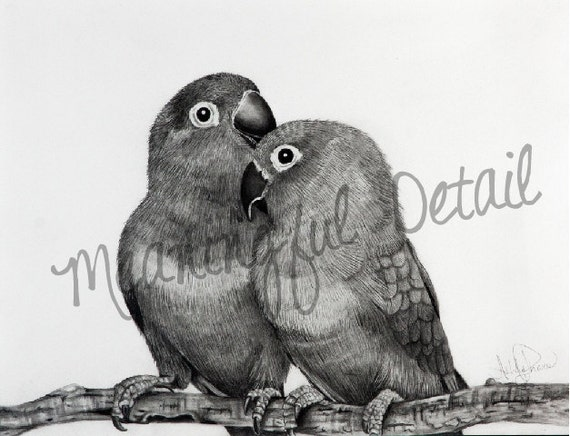 Love Bird Pencil Drawing | www.pixshark.com - Images ...