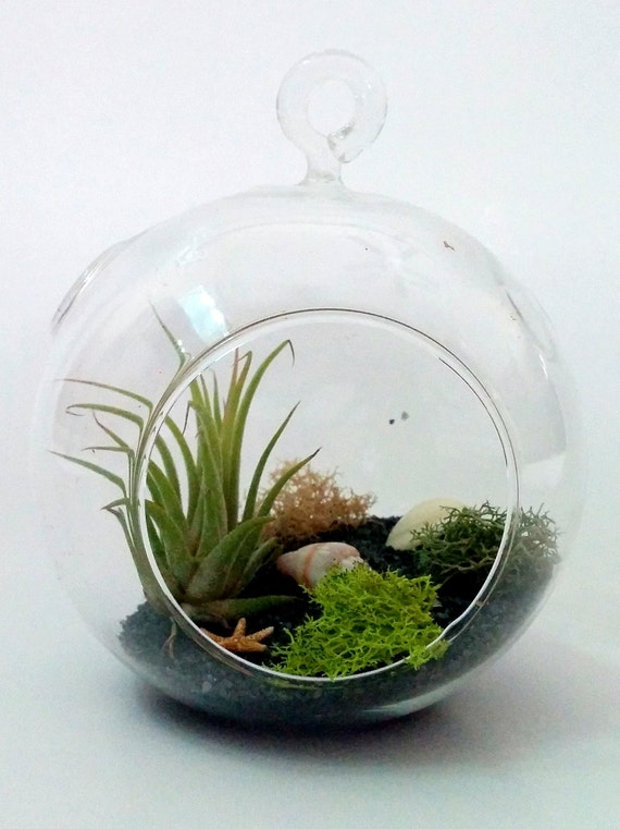 https://www.etsy.com/ie/listing/179626690/complete-diy-air-plant-miniature-garden?ref=shop_home_active_10