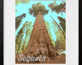 Sequoia National Park Art California Travel Poster Print Home Decor (ZB12)