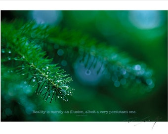 Reality is an Illusion,Inspirational Quote Card,Dew on Branches, Tree rain drops,   HandMade Photo,Tim Swanky Fine Art, Swanky Photographic