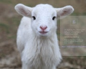I use natural and dyed sheep's wool! - GBootie