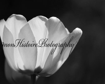 Black and White Flower, Nature Photography