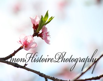 Pink Blossom, Nature Photography