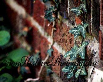 Ivy and Brick, Nature Photoraphy