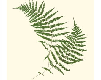 Pressed Lady Fern Original Botanical Print
