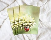 Set of 3 Blank Ladybug Greeting Cards, 4x6
