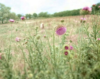 Flower photography, Flower photo, spring decor, nature decor, home decor, green, pink, botanical, nature photography, field of flowers