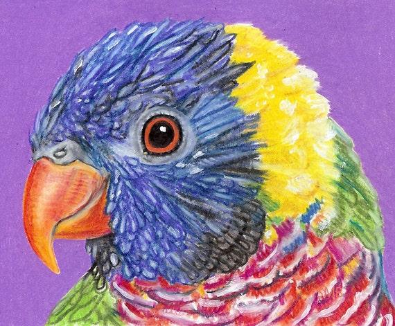 Rainbow Lorikeet (Green-naped Lorikeet) Original Prismacolor Drawing by Sally Blanchard