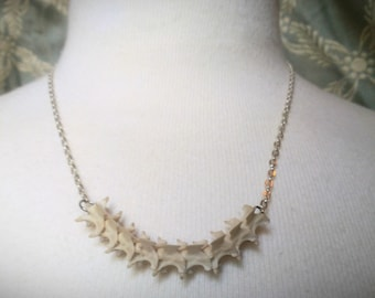 Real bone snake spine vertebrae necklace