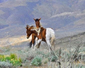 Wild Horse. Fine Art. Horse Art. Wild Mustangs. Foals. Wild Horses Fighting