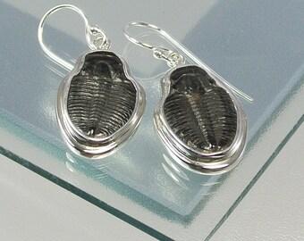 Trilobite Sterling Silver Earrings