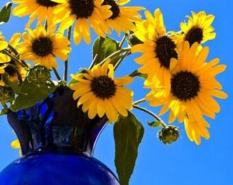 Tijeras Sunflowers
