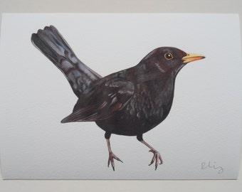 Blackbird Illustration Giclee Print, A5