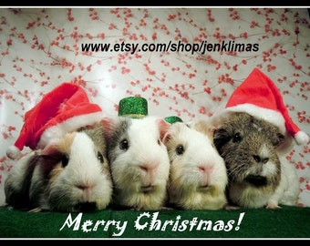 """Cherries in the Snow GUINEA PIGS Santa Claus Christmas Portrait - Limited Edition 8x10"""" Photograph"""