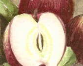 ACEO Original Watercolor  Apple of My Eye