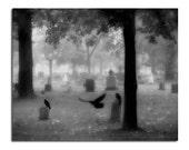 Silver Metallic Print, Black And White, Monochrome, Silver Metallic Photograph - A Crow Conspiracy