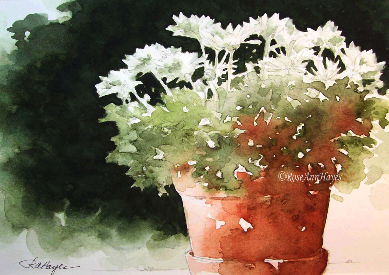 White Chrysanthemums In Terra Cotta Pot Watercolor Print Of