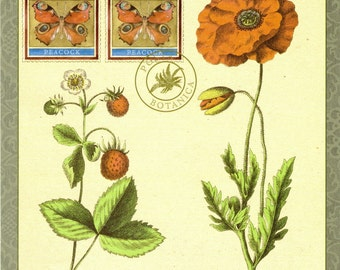 Alpine Strawberry & Poppy Flora Botanical with Peacock Butterfly Fauna - Oversized Postcard