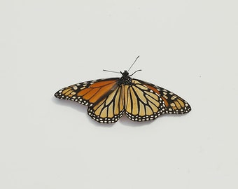 Monarch Butterfly 8x10 Fine Art Nature Photography Print