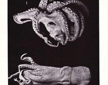1910 Cephalopod Print - Vintage Antique Squid Octopus Ocean Nature Science Animal Art Illustration Cabin Cottage Home Decor for Framing