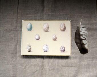 Original art reproduction print Wild Bird Eggs natural history art on wood block 5x7 rustic home decor gardening art
