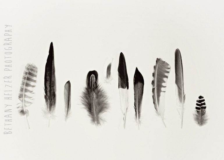 Black And White Feather Photography Black And White Feather