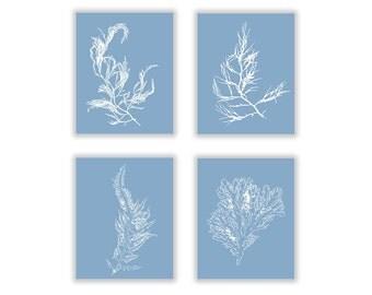 Oversized to Extra Small, French Blue Ocean Seaweed Botanical Prints, Set of Four, Beach House Decor, Coastal Artwork