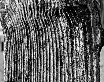 English Coastal Erosion, Distressed Wood - Black and White Fine Art Photograph - Home or Office Decor, Various Size and Mounting Options