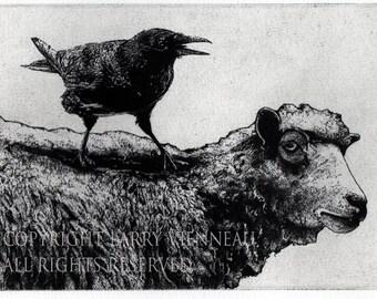 Raven artwork , Raven, crow,  black bird, Sheep, Ram,  Aesop Fables,  etching