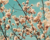 cherry blossom tree photograph, nature photo, flower print, pink, mint blue, spring, nursery bedroom wall art, cottage decor, baby girl room