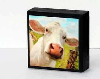 photo block, cows, funny, photography, robins egg blue, spring sky, spring green, nature photography, 4x4, shelf art,wall art,