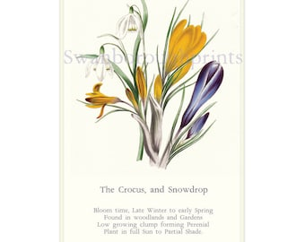 Spring Flower Print. Crocus Flowers Snowdrop Flowers. Cottage garden Art Print. Cottage Garden. Spring Garden Bulbs. March Birthday Gift