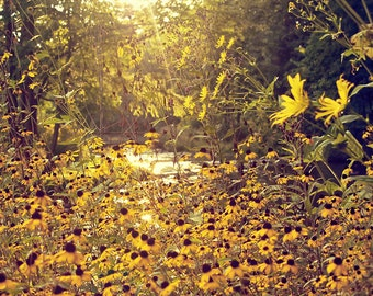 Sunset Wildflowers 2 - Michigan Fine Art Photography - Kalamazoo Fine Art Photography