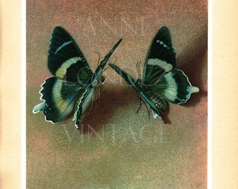 1950 Tropical butterfly print Alcides Agathyrsus Buitterfly art Butterfly gift Vintage butterfly poster French wall hanging