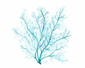 Turquoise blue Coral print, watercolor sea fan illustration - Beach home decor, Archival giclee print on fine art paper, 8x8 or 12x12 inches