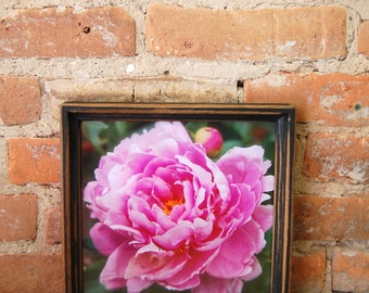 Fine Art Pink Peony Framed Photograph
