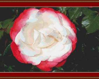 Red And White Rose Cross Stitch Pattern