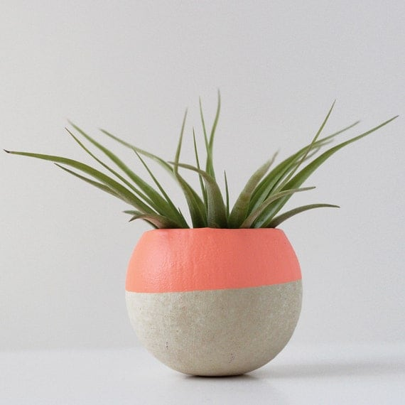 Small Melon / Orange Air Plant Pod w/ Air Plant