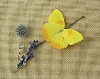 Butterfly, Real Dried Butterfly Specimen, Décor or Terrarium Accent, Photography Prop, Phoebis Philea