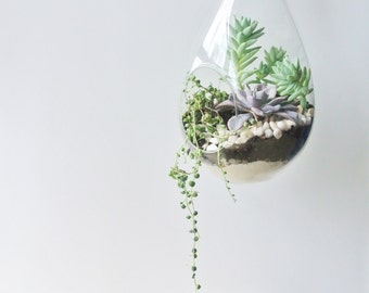 TOP SELLER Color Greens Hanging Succulent Terrarium - Succulent Planter, DIY, Living Home Decor, Gift , Hanging Terrarium