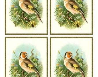 Antique GOLDFINCH  BIRD on THISTLES - Framed Image Sheet - Digital Instant Download - nature avian songbird ephemera print collage supply