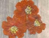 Pressed Orange Cosmos, Real Pressed Flowers