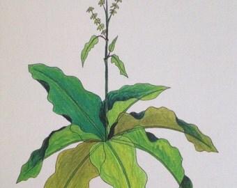 Plant Cards.  (art plus botanical & medicinal info.)