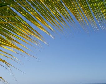 Palm Tree Photography - Beach Photography - Travel Photography - Jamaica Photography - Ocean Photography - Landscape - Water - Fine Art