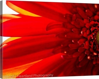 Red Daisy Canvas, Red and Yellow, Canvas Wall Art, Macro Photography, Nature Photography, Flower Art, Flower Macro, Close up Photographs