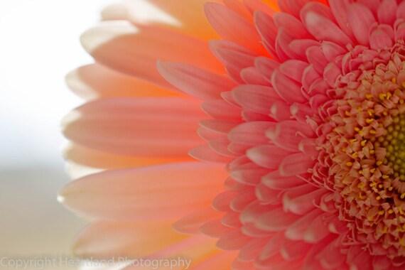 Pink Daisy Print, Nature Photography, Flower Home Decor, Nursery Print, Pink Flower, Macro Flower Photo, Pink Wall Art, Modern Photography