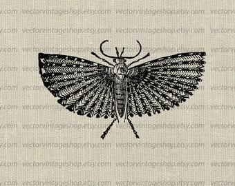 Moth clipart | Etsy