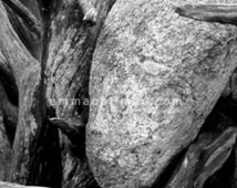 Black and white nature photography: textured rock with twisty branches lichen, old wood, stone, zen art, rustic country art, cottage decor